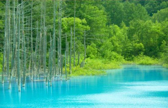 Голубой пруд в Японии (19 фото + 2 видео)