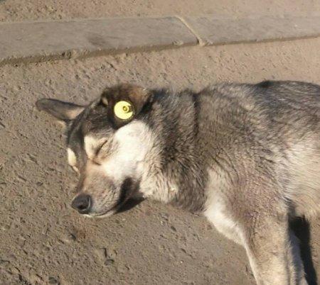 Интересная новость о бездомных животных