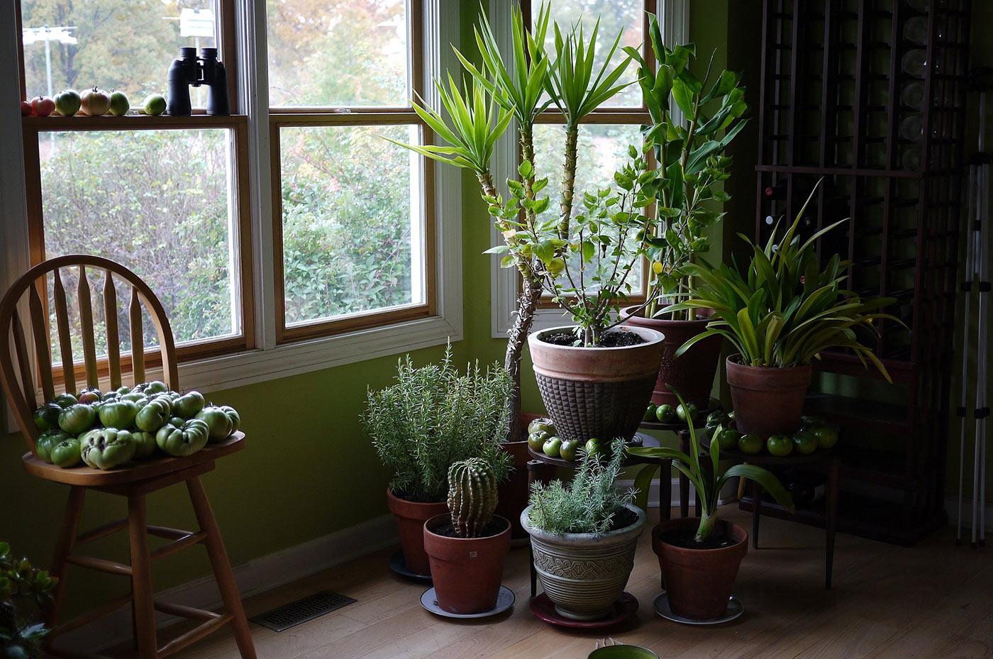 Выращивание комнатные растения 91