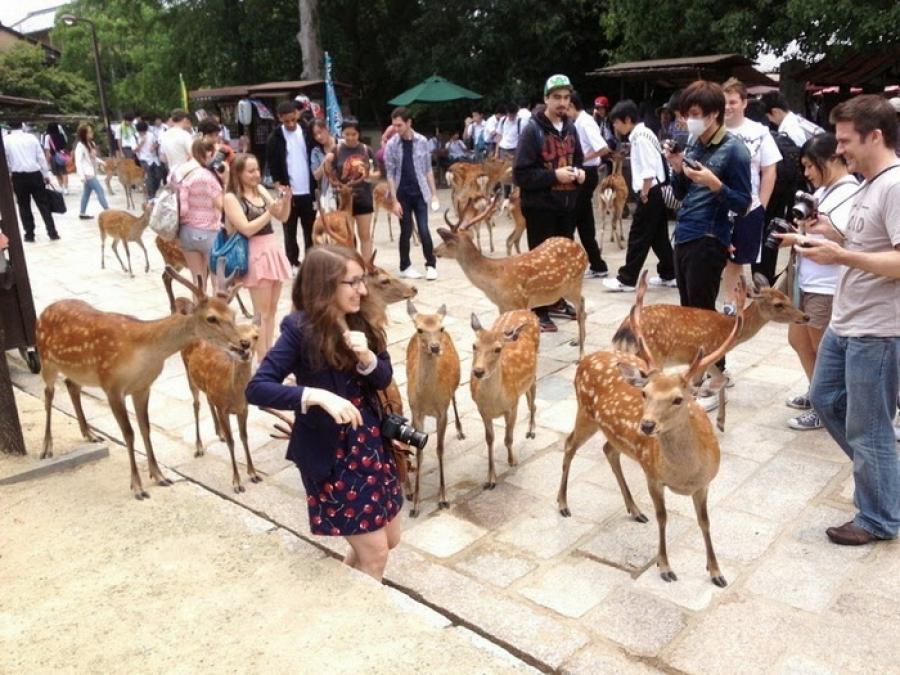 Японский город оленей